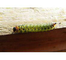 Caterpillar Deux Photographic Print