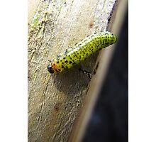 Caterpillar Une Photographic Print