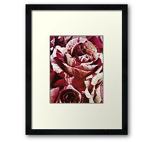 Red and White Roses Une Framed Print