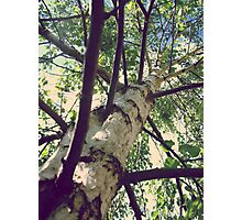 Reach for the Sky Deux Photographic Print