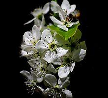 Spring Silhouette by Vicki Pelham