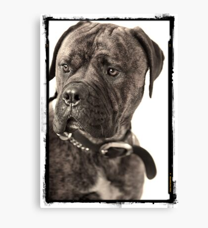 """Hank"" Canvas Print"