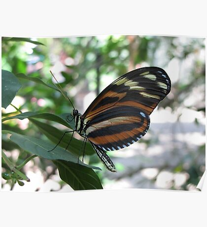 In a Butterfly Garden Poster