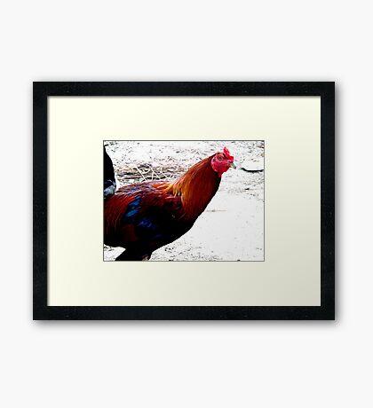 Rooster. Framed Print