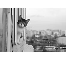 kitty on the balcony Photographic Print