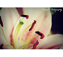 Birthday Lily Photographic Print