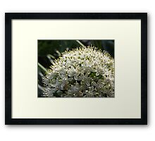A Ball of Flowers Framed Print