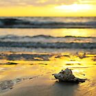 Sunset Shell Reflection by Amy Dee
