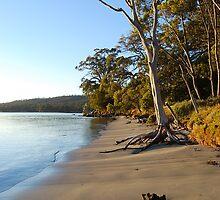 Tasmanian Beach at Dawn by CelticHorse