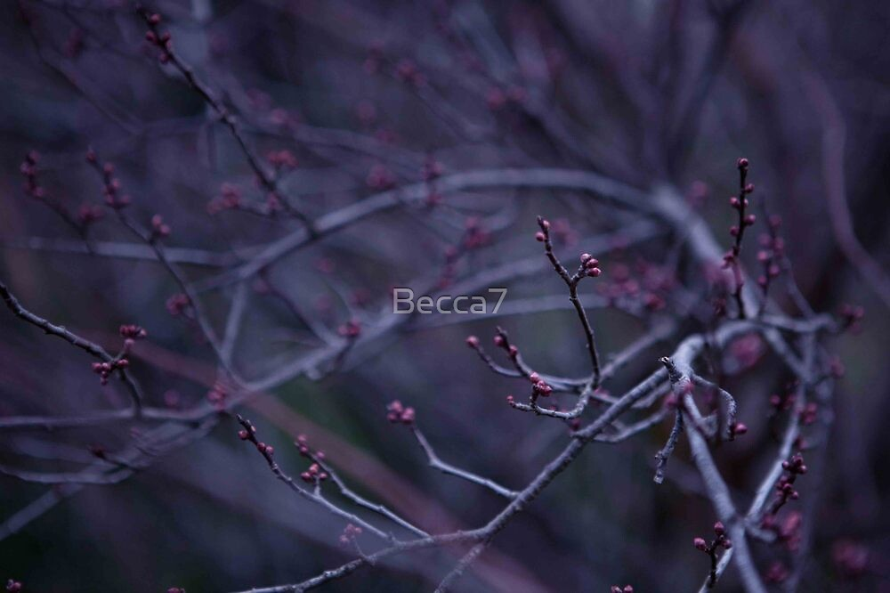Untitled by Becca7