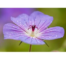 Purple Crown Photographic Print