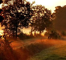 Enchanted by the morning light by jchanders