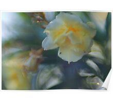 White Oleander Redux Poster