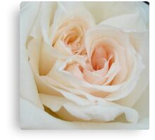 Close Up View Of A Romantic White Wedding Rose Canvas Print