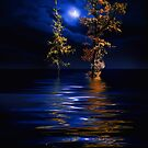 New Moon by Igor Zenin