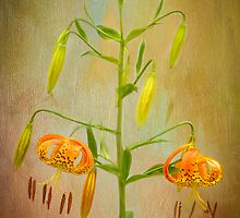 Ode to a Lily by Marilyn Cornwell