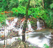 shot @waterfalls near Kumta by Sudheerhegde
