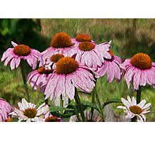 Cone Flower Photographic Print