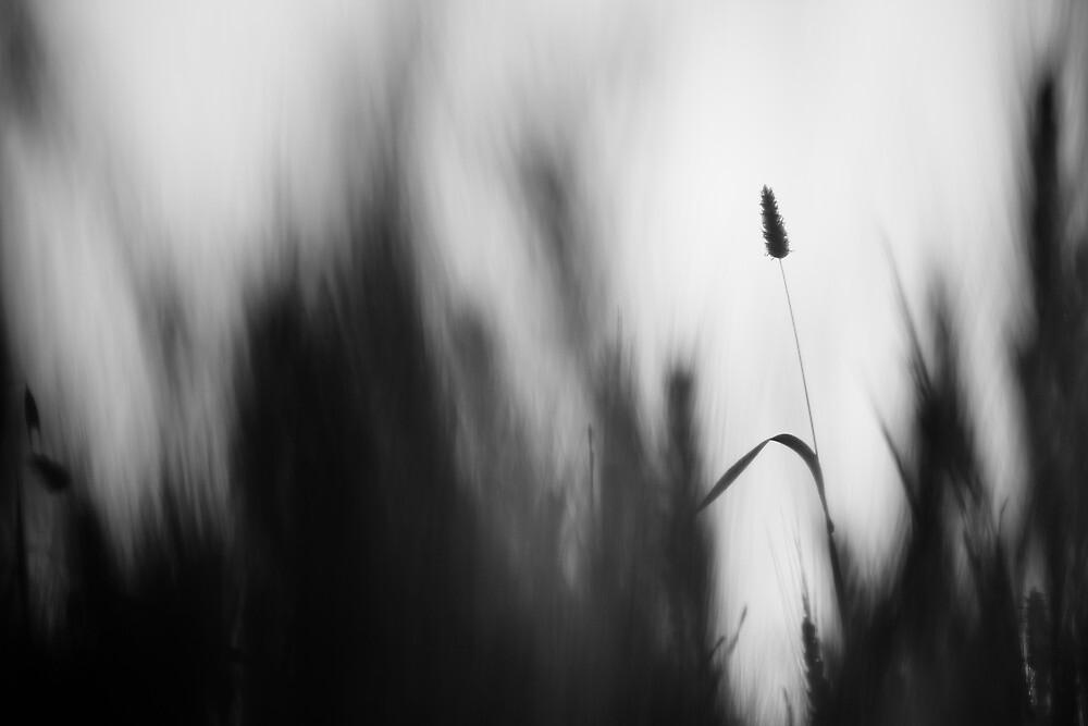 in my dreams by Victor Bezrukov