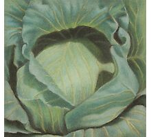 Cabbage in the Sun Photographic Print