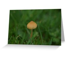 Tiny Toadstool on the Towans Greeting Card
