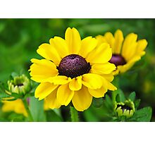 A Splash Of Sunshine Photographic Print