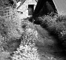 Wild Garlic Track by Anne Gilbert