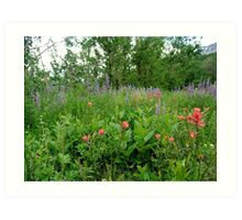 Lupines, Indian Paintbrush and Aspens Art Print