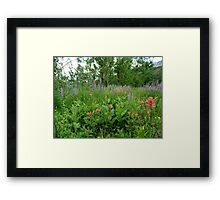 Lupines, Indian Paintbrush and Aspens Framed Print