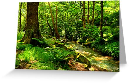 Hawksworth Woods by Colin Metcalf
