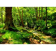 Hawksworth Woods Photographic Print