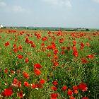 Poppy Field by crhodesdesign
