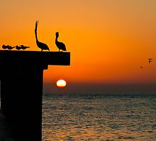 Evening sun by Trevor Middleton