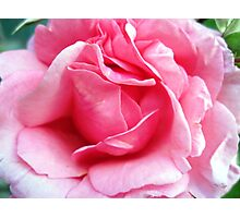 Aloha - Rose Photographic Print