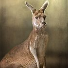 Portrait of a 'roo.... by polly470