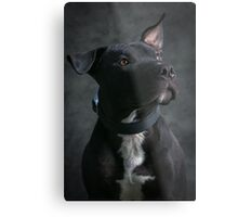Can I have my treat now Metal Print