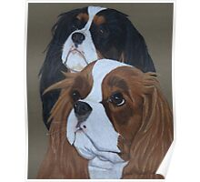 Cavalier King Charles Spaniels Poster