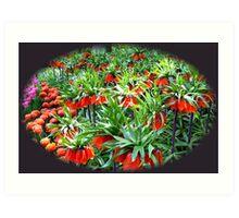 0range Crown Imperials - Keukenhof Gardens Art Print