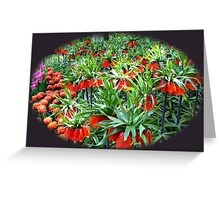 0range Crown Imperials - Keukenhof Gardens Greeting Card