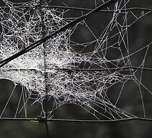 Web n Wire Fencing by LadyEloise