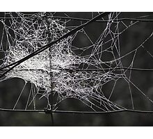 Web n Wire Fencing Photographic Print