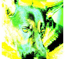 A dog of many colours. Photographic Print