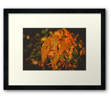 Autumn Tree Branches 2 Framed Print