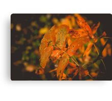 Autumn Tree Branches 2 Canvas Print