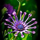 Purple Beauty by scenebyawoman