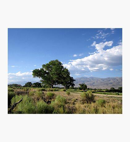 Bishop Landscape Photographic Print
