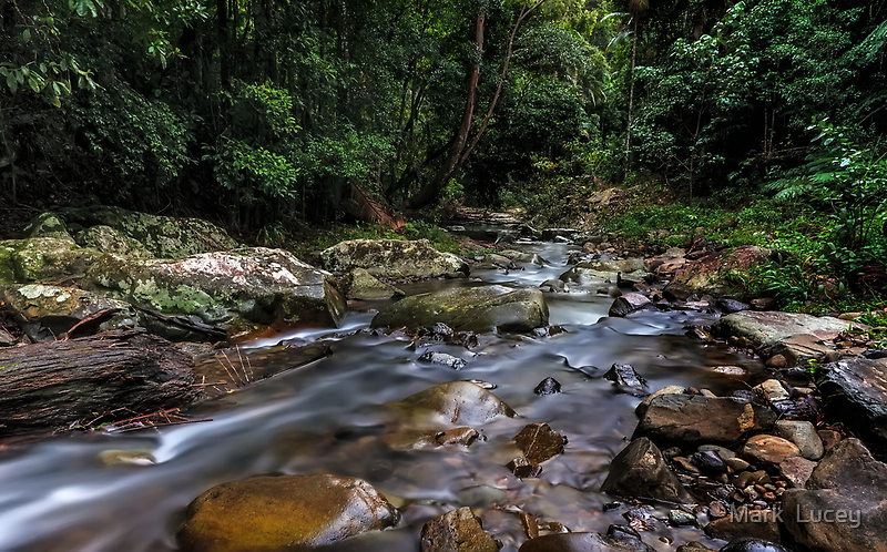 Creek in the Wilderness by Mark  Lucey