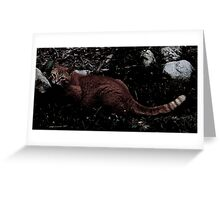 Cheshire Cat, Why Are You Here? Greeting Card