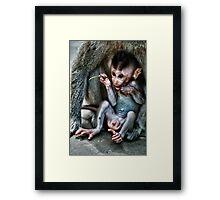 Infant Macacque Monkey Framed Print