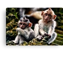 Two Young Macacque Monkeys Canvas Print